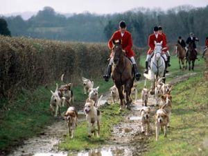 Fox Hunting- England